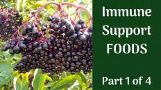 Immune Support Foods Elderberry