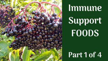 Immune Support Foods Elderberry